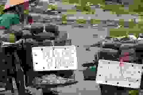 """""""Luật ngầm"""" của dân buôn hoa quả vỉa hè"""