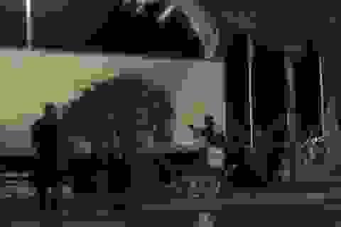 Khoảnh khắc cảnh sát Pháp tiêu diệt tài xế xe tải trong màn đấu súng