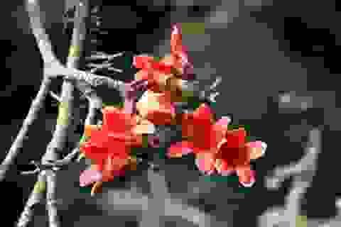 Trẩy hội chùa Hương mùa hoa gạo