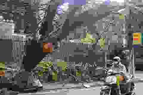 Cây lớn bật gốc vì bão số 1 vẫn lơ lửng giữa đường Hà Nội