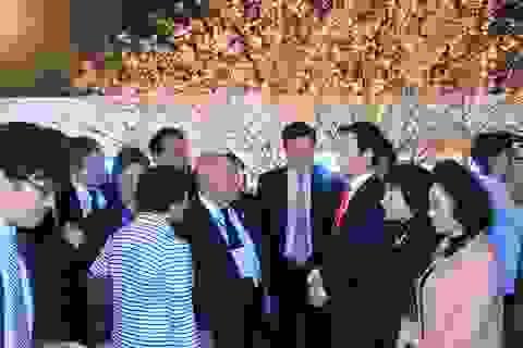 Người dân TP HCM nô nức ngắm hoa Anh đào Nhật Bản
