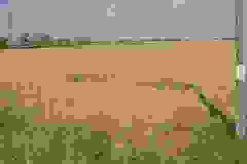 Giải pháp thủy lợi kết hợp nông nghiệp để ứng phó xâm nhập mặn