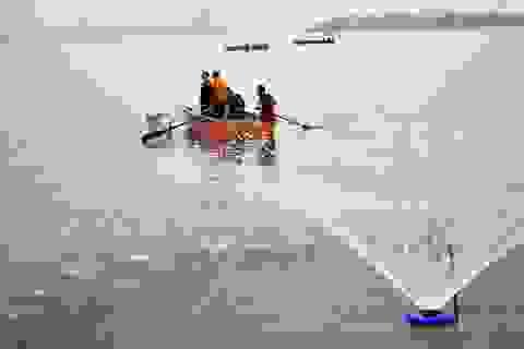 Thủ tướng yêu cầu sớm làm rõ nguyên nhân cá chết ở Hồ Tây
