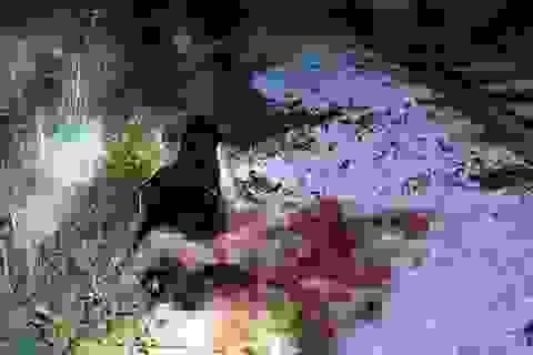 Vụ thuê người chặt chân, tay: Cảnh sát kể chuyện lần tìm manh mối