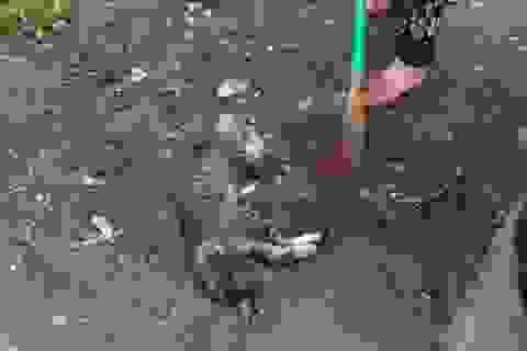 Cả khu phố náo loạn vì một chú mèo