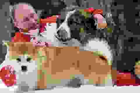 Tổng thống Putin từ chối nhận món quà chó quý của Nhật Bản