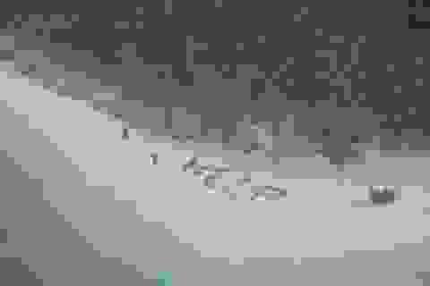 May mắn được cứu sống khỏi đảo hoang nhờ xếp chữ từ lá cọ