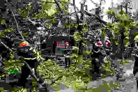 Phố phường Hà Nội tan hoang sau bão