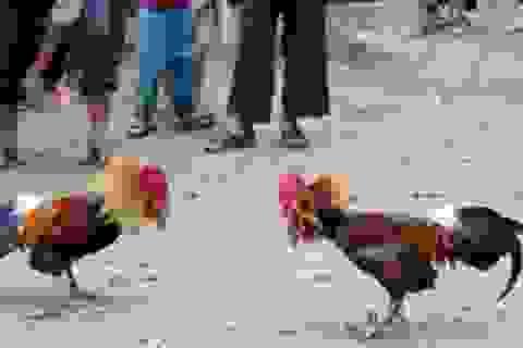 Triệt phá trường gà bắt gọn 54 con bạc