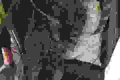 Cá sấu 70kg giữa đầm Hà Nội được bán 8 triệu đồng