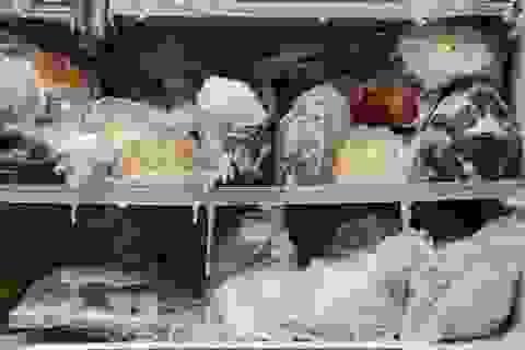 Hơn 3 triệu tấn thực phẩm đông lạnh bị vứt đi vì hiểu lầm