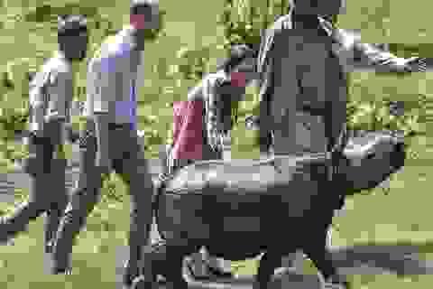 """Hoàng tử William và nỗ lực """"giải cứu"""" động vật hoang dã"""