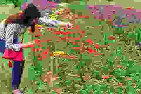 Làng hoa hối hả đón Tết