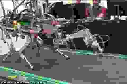Italy phát triển robot bốn chân cho các vùng bị thảm họa