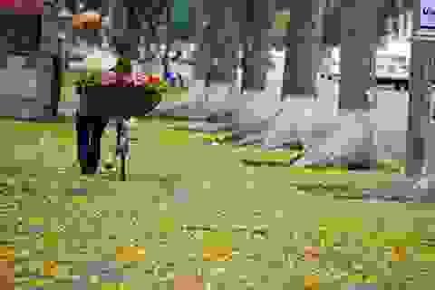 Đắm chìm trong sắc màu mê hoặc của Hà Nội mùa xà cừ đổ lá