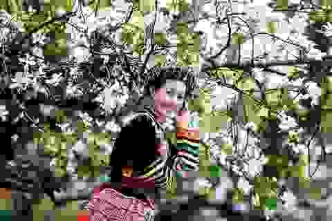Kiêu sa hoa ban trắng ở Điện Biên anh hùng