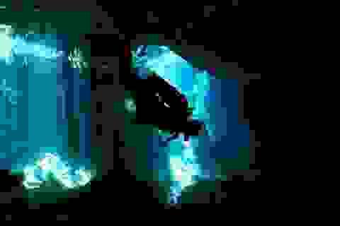 Khám phá 10 hang động dưới lòng thủy cung đẹp nhất thế giới