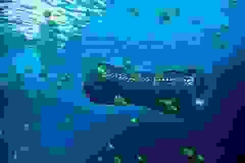 Robot siêu nhỏ giúp làm sạch vùng nước ô nhiễm