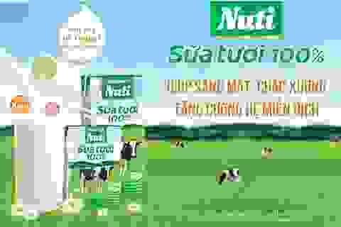 Cao nguyên Gia Lai - nơi đàn bò xứ ôn đới sống hạnh phúc cho ra dòng sữa tươi Nuti 100% thơm ngon