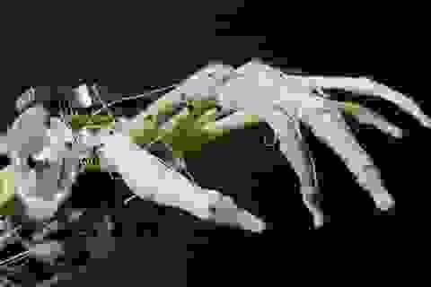 Công nghệ bộ phận giả tiên tiến cho người tàn tật