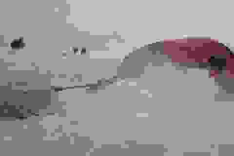 Nam Cực đã nóng lên gấp 2-3 lần mức trung bình của hành tinh