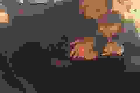 Jennifer Lopez tung ảnh tình tứ bên bạn trai kém 17 tuổi