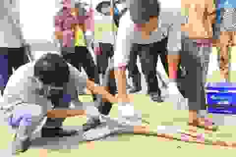 Vụ cá chết hàng loạt tại biển miền Trung: Nghiêm cấm người dân ăn cá chết