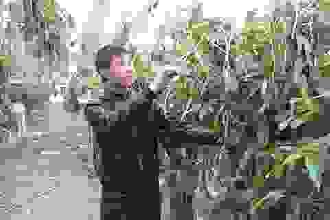 Nông dân trẻ bén duyên hoa lan, thu tiền tỷ mỗi năm