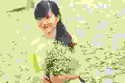 Thảm lá sấu rụng vàng ruộm thu hút bạn trẻ Hà thành