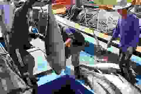 Lương lao động VN làm thuyền viên tàu cá tại Đài Loan không dưới 20.000 Đài tệ