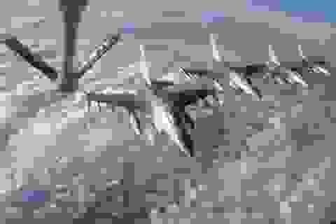 Tại sao không nên lập vùng cấm bay ở Syria?