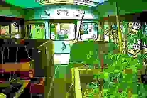 Lạ lùng trồng rau trong… xe buýt