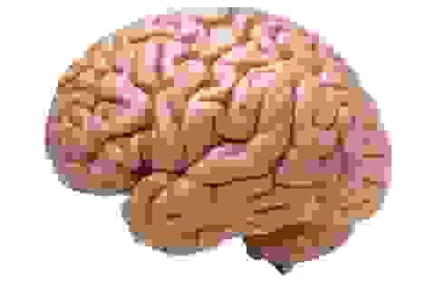 Não người phát triển lớn là kết quả tác động trong các quan hệ xã hội.