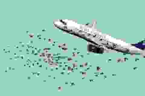 Cú hạ cánh để đời của cơ trưởng Sully Sullenberger: Chỉ tại một đàn chim