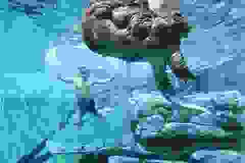 """Lồng kính trong suốt cho phép du khách """"đối mặt"""" với cá sấu"""