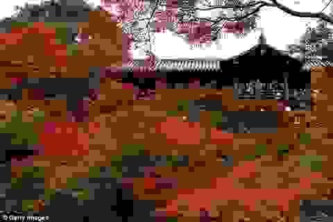Đến thăm ngôi chùa cấm khách du lịch chụp ảnh