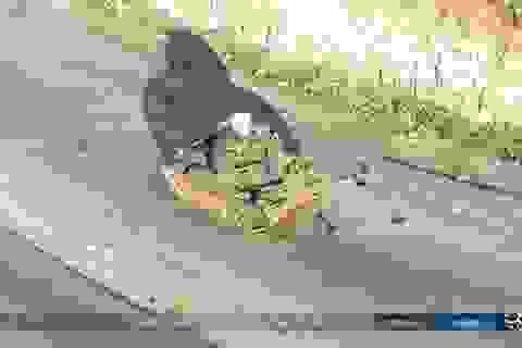 VKS Nga cứu thua quân Thổ Nhĩ Kỳ phá vây khỏi Al-Bab!