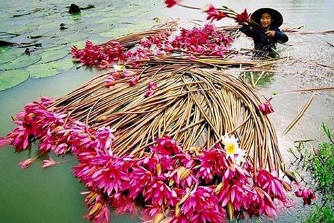 Xốn xang mùa nước nổi Châu Đốc
