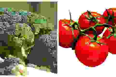 """Những """"bộ đôi"""" thực phẩm có lợi cho sức khỏe bạn nên biết"""