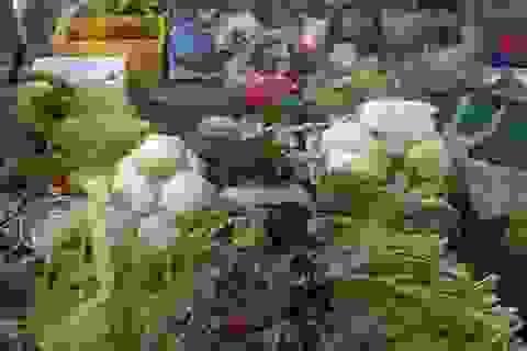 """Hà Nội: Rau xanh tăng giá """"chóng mặt"""" vì… giao mùa"""