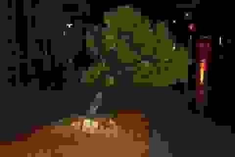 Bão đổ bộ Thái Bình - Ninh Bình với cường độ mạnh