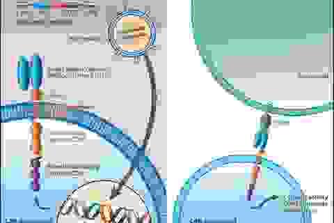 Đáng chú ý 2 thử nghiệm điều trị ung thư bằng tăng cường hệ miễn dịch