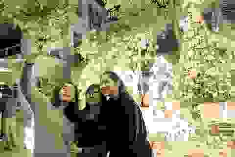 Ngỡ ngàng vườn Giáng sinh lung linh trong trường Đại học