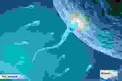 Nâng cao chất lượng tinh trùng điều trị vô sinh hiếm muộn