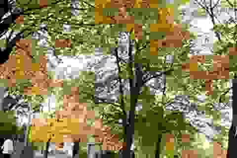 Ostrava mùa Xanh - Vàng - Đỏ - Trắng
