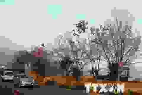 Người kỹ sư gốc Việt và ước mơ phủ sắc anh đào bên Hồ Xuân Hương