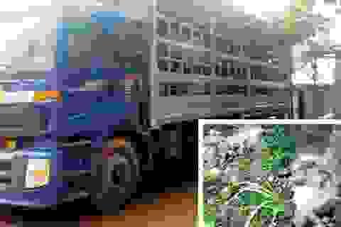 """Trung Quốc dừng nhập khẩu lợn: Lợn """"quay đầu' về đâu?"""