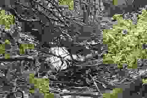 Tìm thấy thi thể du khách người Anh mất tích tại Sa Pa