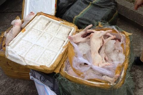 """Thanh Hóa: Hơn nửa tấn thịt lợn sữa """"làm thượng đế"""" trên xe khách"""