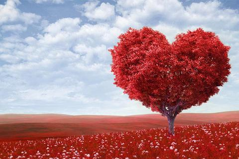 """Những video """"đốn"""" hàng triệu con tim nhân ngày lễ Valentine"""